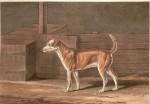 Un perro 7 (Medium)