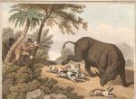 Caza African Rhinoceros