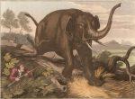 elefante-cazado