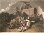 caza-de-la-hiena