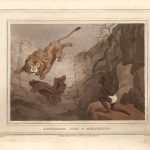 caza-del-leon-rottentot
