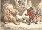 caza-del-oso-polar