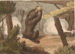caza-del-oso-con-trampa