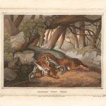 caza-del-zorro-aleman