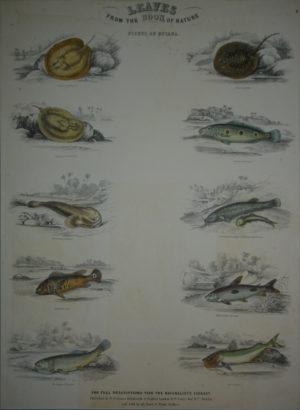 Peces/Fish
